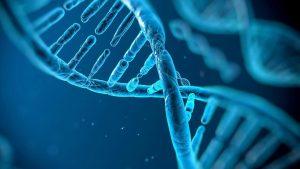 Εισαγωγή στους γενετικούς αλγορίθμους (genetic algorithms)
